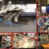تشکیل نشست شورای عالی کار با دستور کار افزایش قدرت خرید کارگران