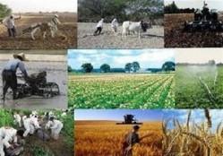 ۴ دلیل سودآور نبودن کشاورزی در ایران